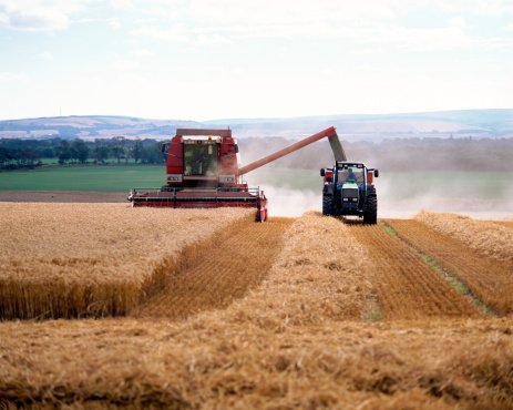 Governments increasing agricultural support, says OECD study