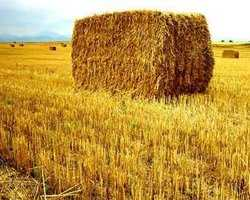 Straw as energy source underestimated