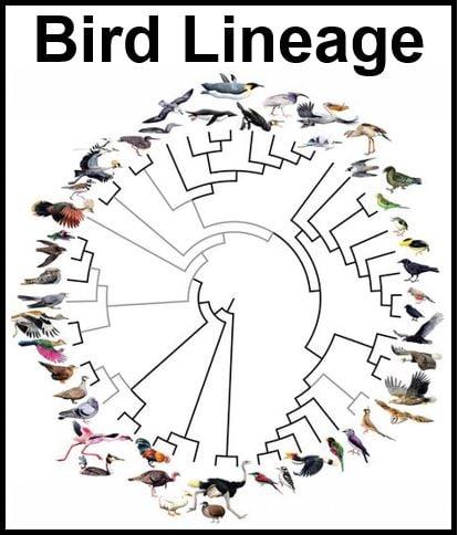Bird Family Tree