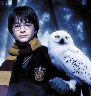 Snowy Owl Hedwig