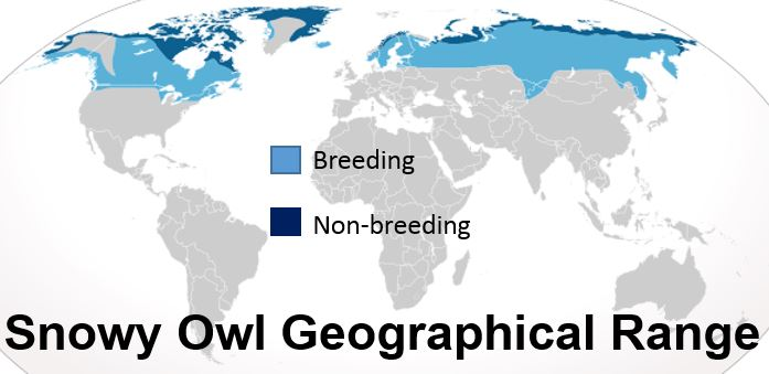 Snowy Owl geographical range