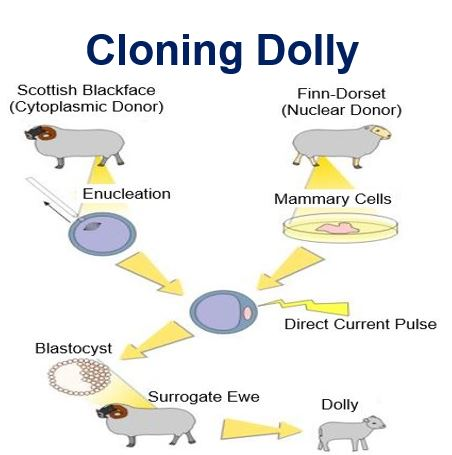 Cloning Dolly