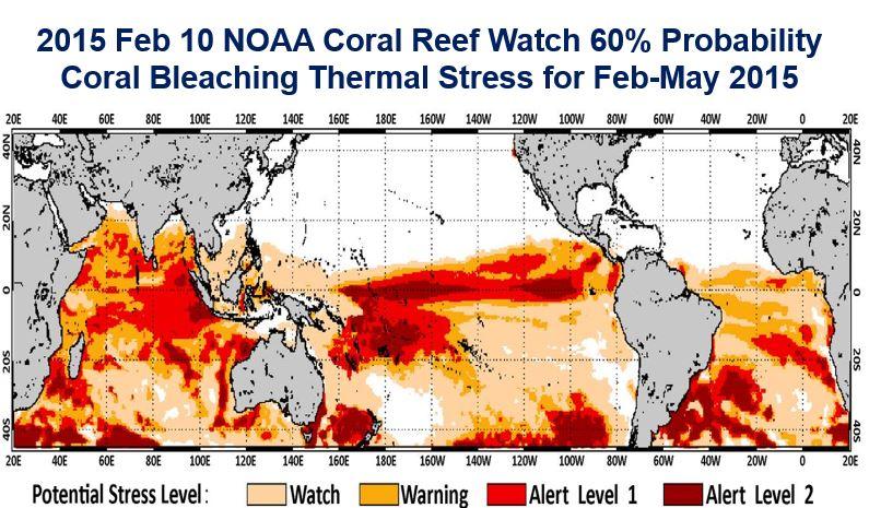 Coral Bleeching Alert