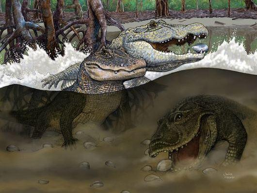Crocs 13 million years ago
