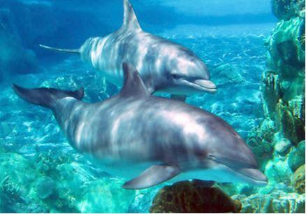 Marine life threat