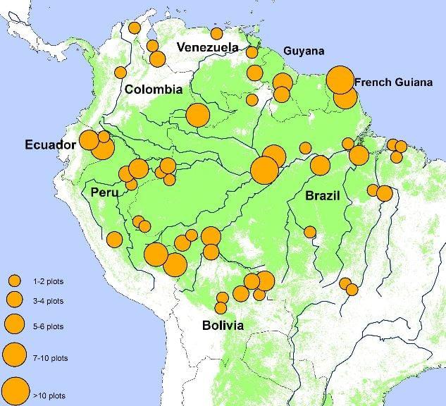 Amazon Rainforest Study Plots