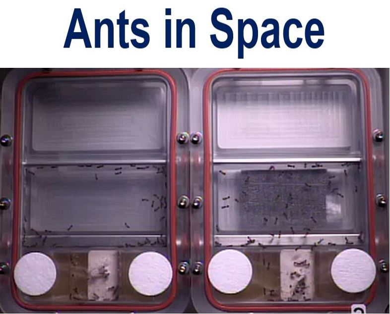 Ants in space pic