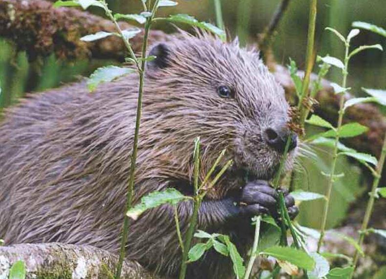 Beaver Project photo