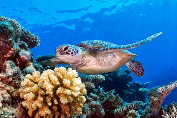 Coral Reef and marine species