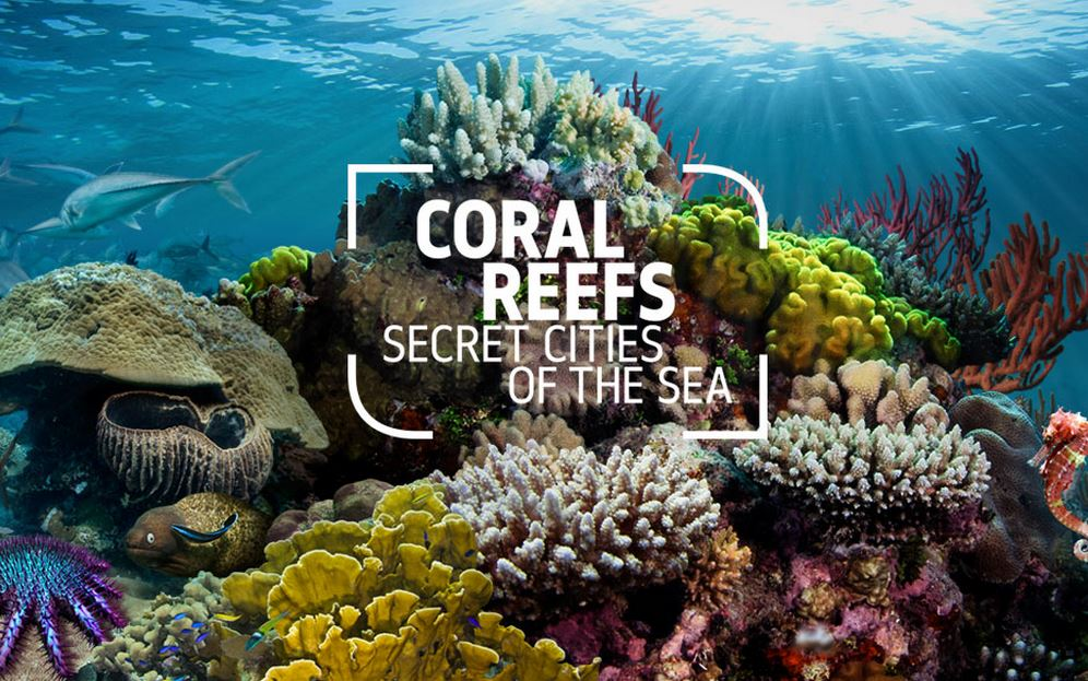 Coral Reefs virtual dive