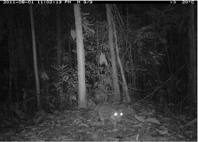 Motion-activated camera of rodent