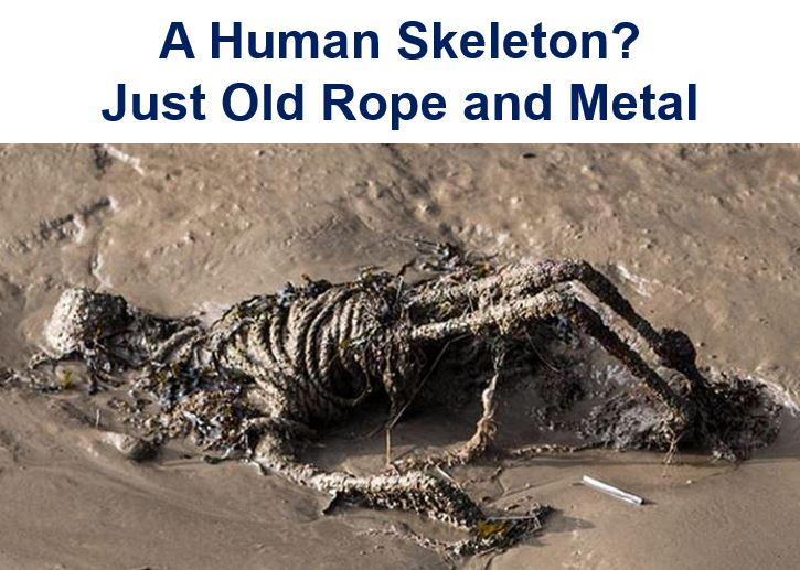 Not a human skeleton