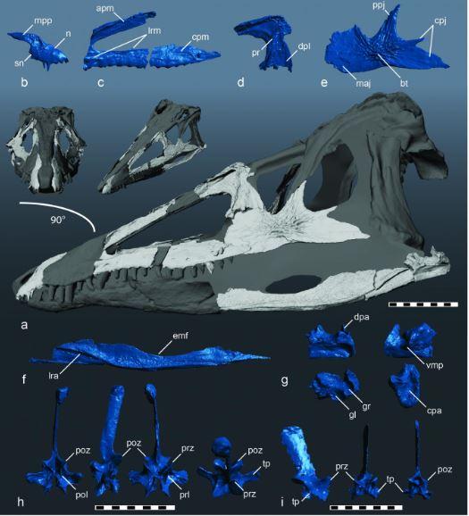 Skull reconstruction