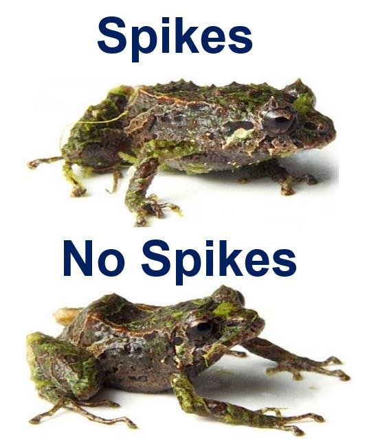 Spiky and smooth frog