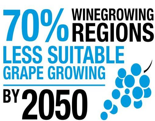 Wine Growing Regions