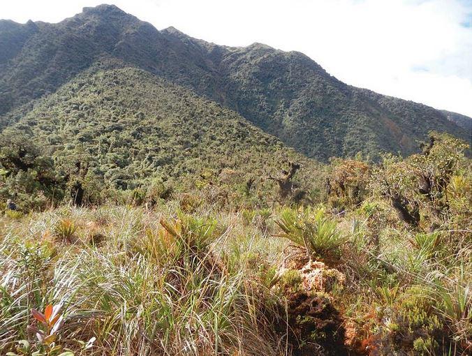 Yanachaga National Park