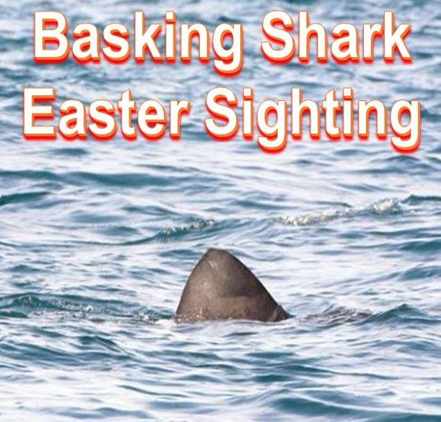 Basking shark Easter sighting