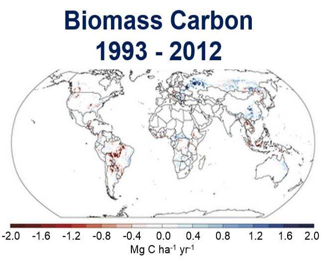 Biomass Carbon