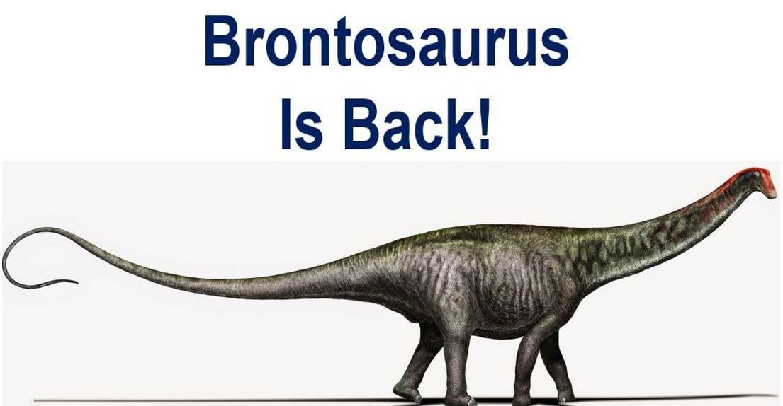 Brontosaurus is back