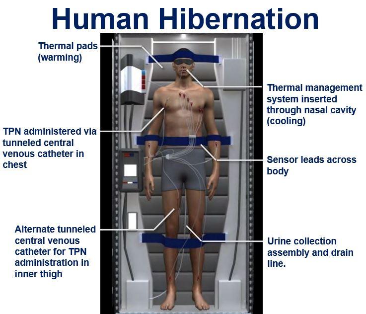 Human Hibernation
