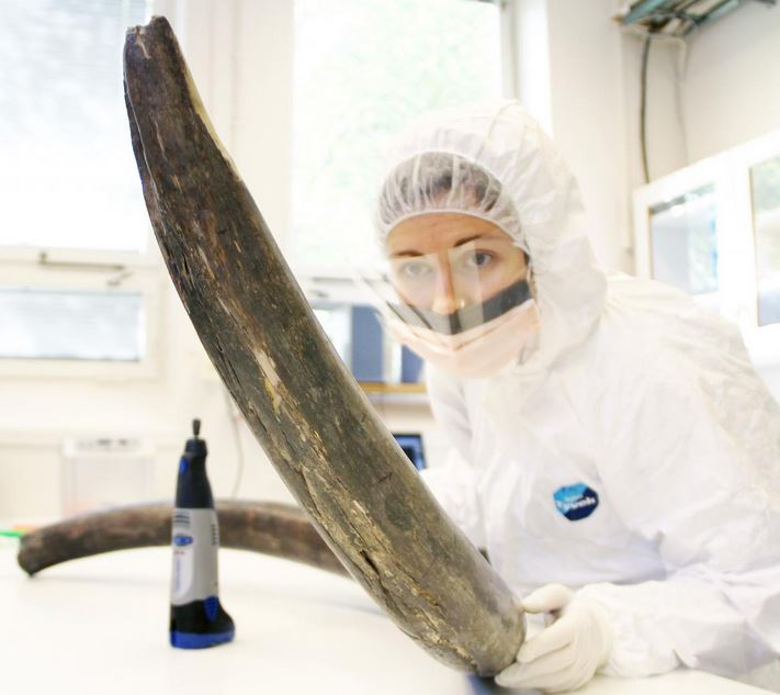 Mammoth DNA