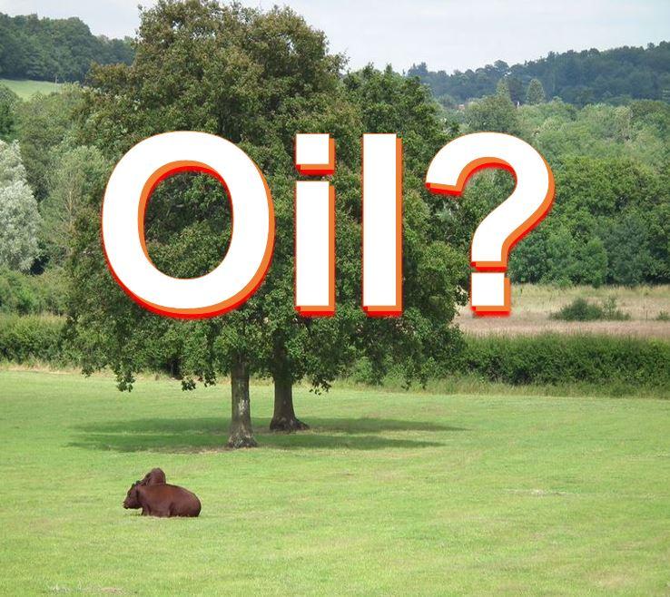 Oil in surrey