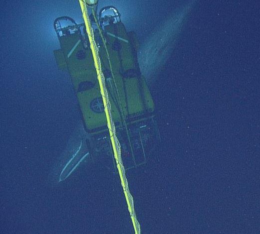 Sperm Whale near ROV