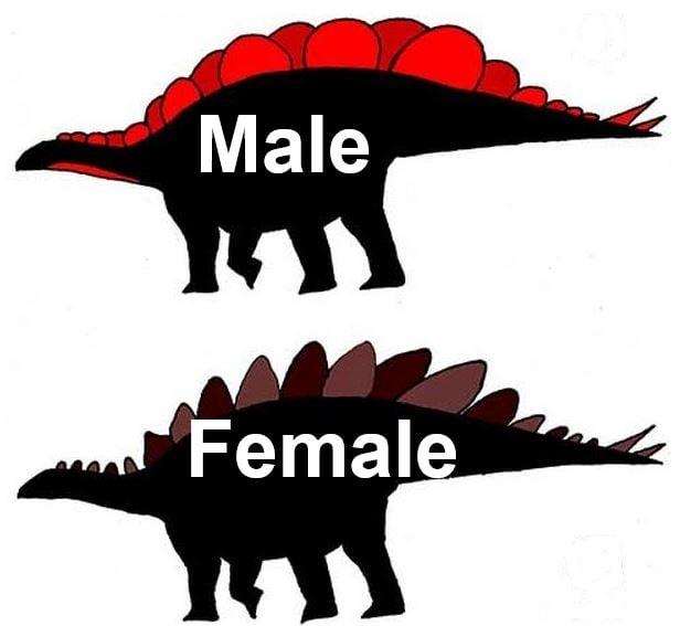 Stegosaurrus male and female