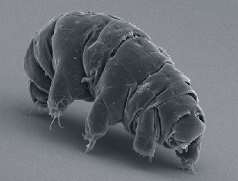 Tardigrade survived space