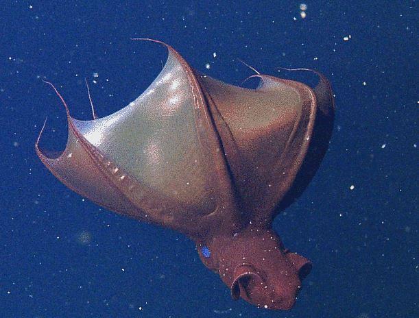 Vampire squid cloak