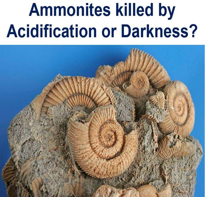 Ammonite extinction