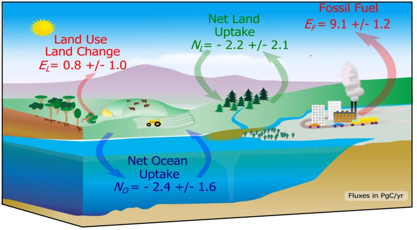Carbon cycle 2010
