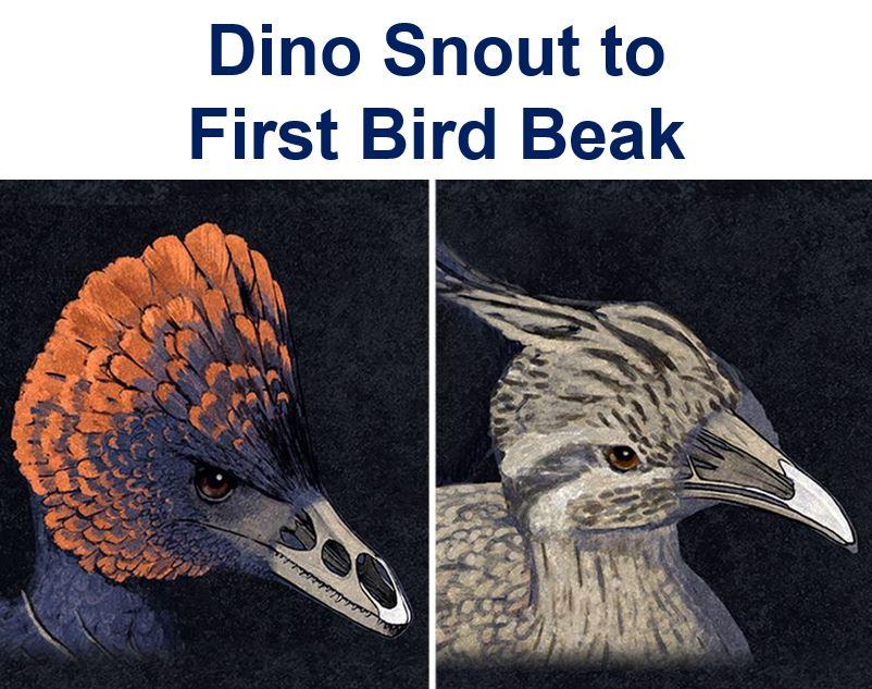 Dino snout to first bird beak