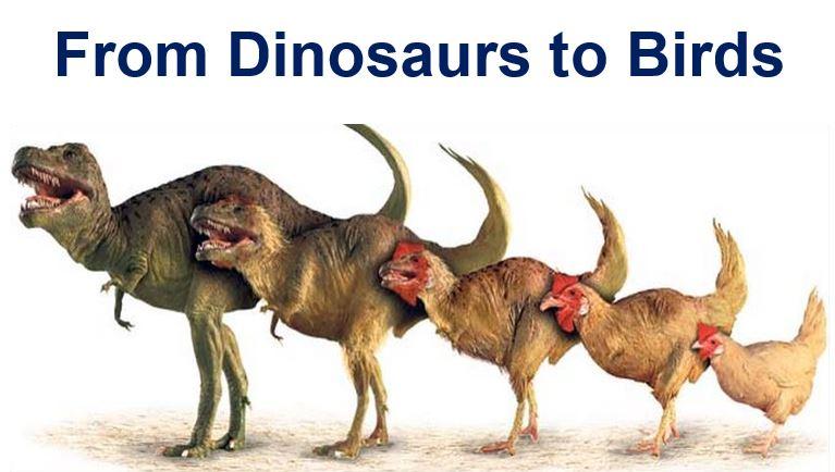 From dinosaur to bird