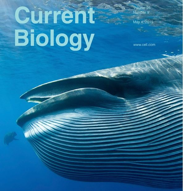 whale current biology