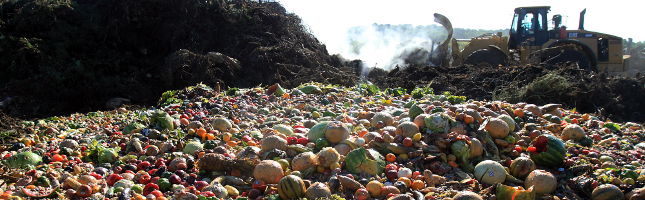 food waste in the united states