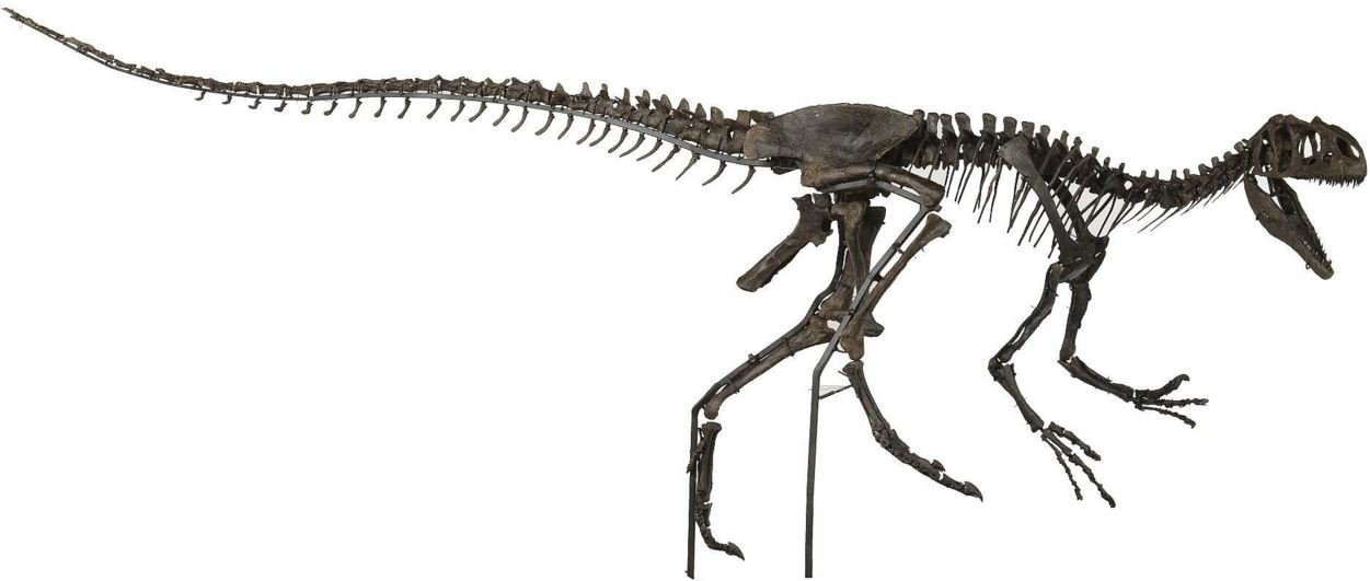 Allosaurus Little Al