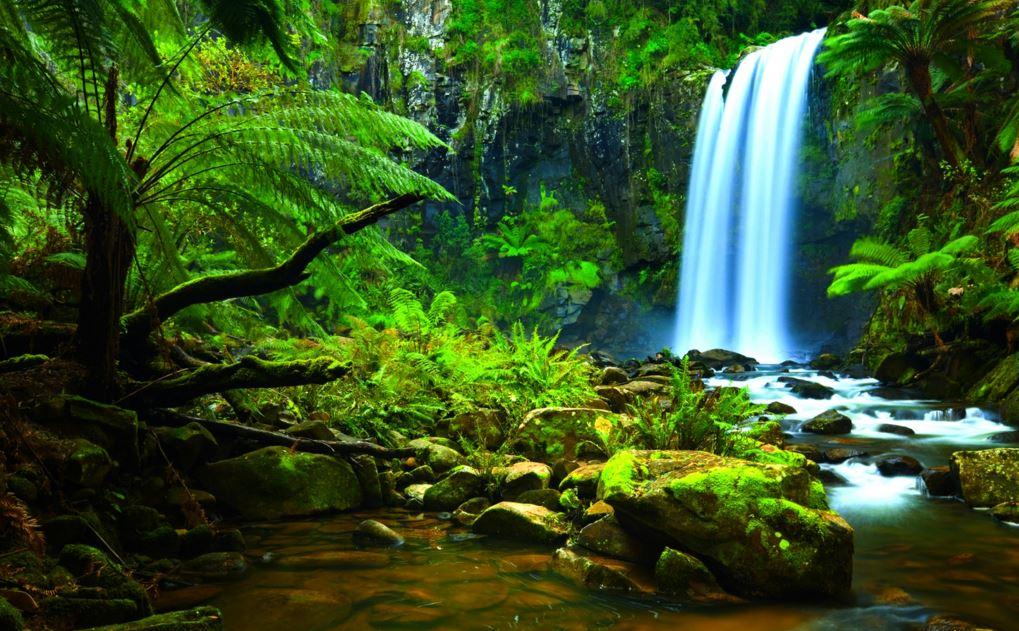 Amazon rainforest status of tree species
