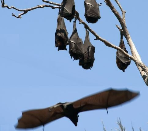 Bats flying and upside down
