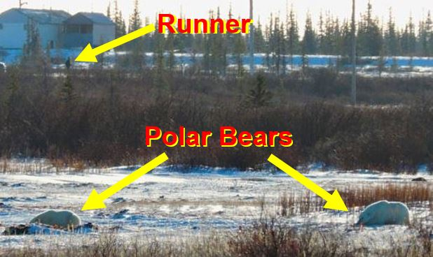 Churchill Polar Bear Marathon