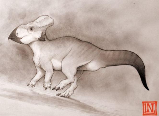 Dog sized dinosaur