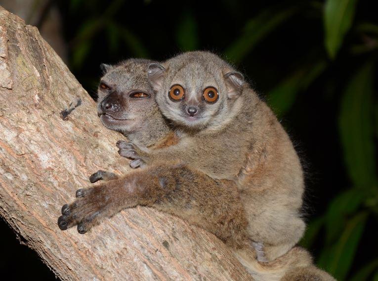 Over half primate species threatened with extinction ...