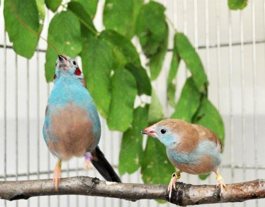 bird tap dance during courtship