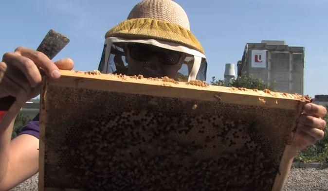 genetically modifying bees