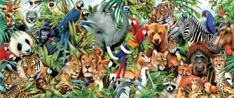Animal life exploded