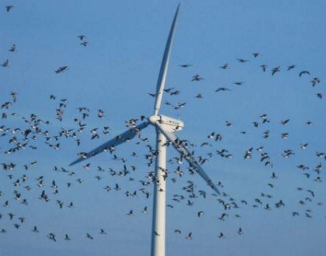 Birds flying into wind turbines