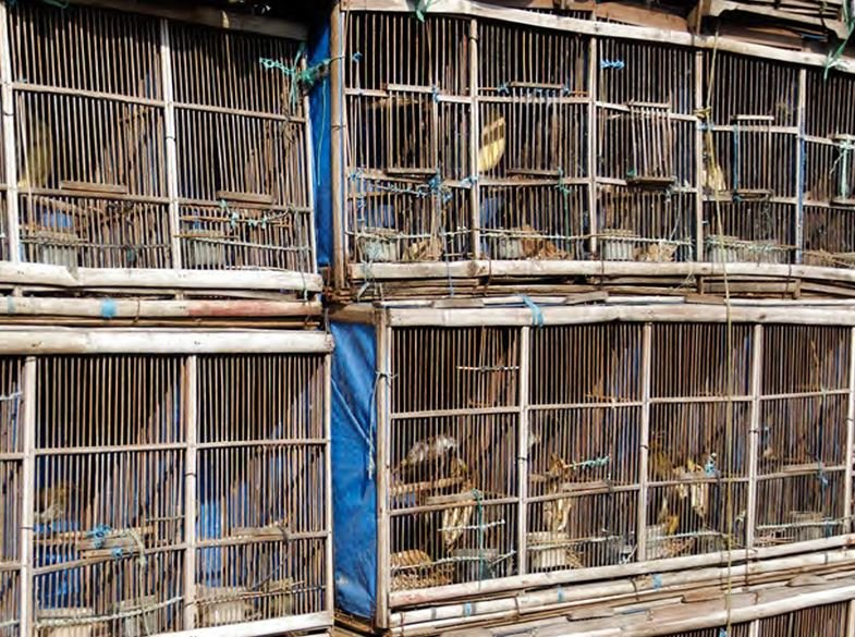 Birds in cages in Indonesia