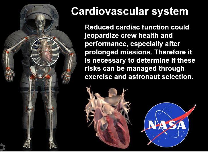 Cardiovascular system astronaut