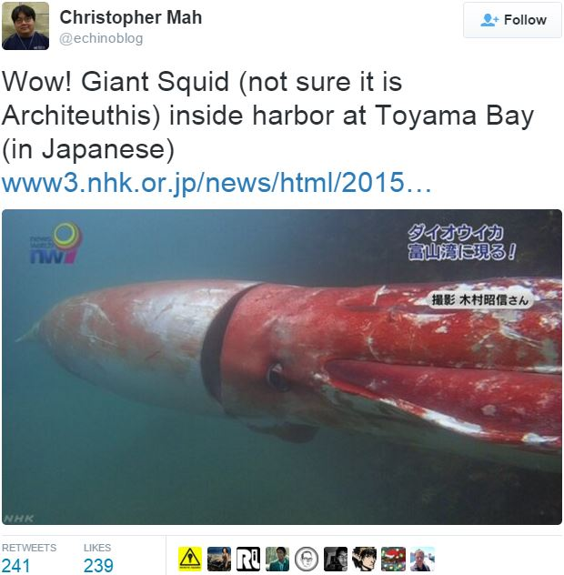 Christopher Mah posted this pic of giant squid