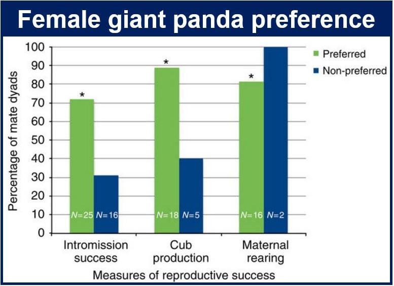 Female giant panda preference